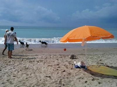 Eix. Gossos a la platja de Sant Gervasi