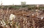 Imatge d'un dels sectors de la Platja Llarga on s'ha intervingut per treure restes invasores