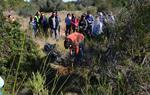 Repoblació forestal a l 'Ortoll