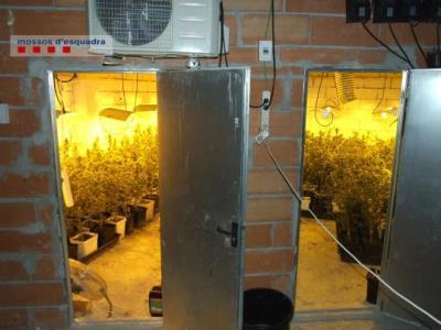 Detingut per cultivar marihuana amagada al soterrani de casa seva a la que s'accedia pel rerefons d'un armari. Mossos d'Esquadra