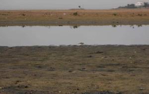 Els ecologistes reclamen la protecció del Corriol camanegre a la platja de Ribes Roges