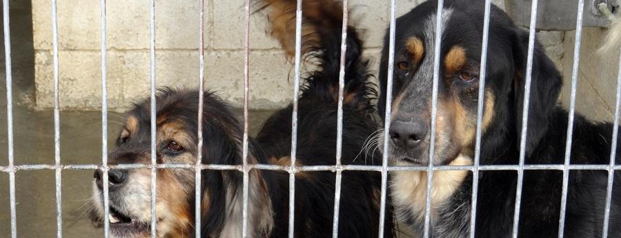 El Centre d'Acollida d'Animals Penedès-Garraf frega la saturació amb gairebé 600 gossos i gats que busquen família