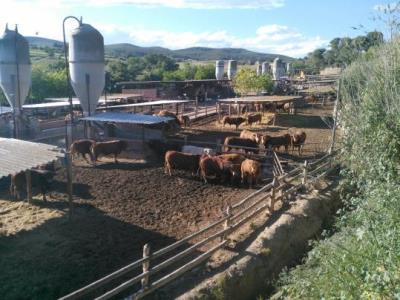 Dues granges de vedells enfronten els veïns de Cal Farines de Castellví amb l'Ajuntament i la Generalitat. Bosc Verd