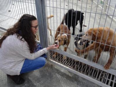 La Mancomunitat aprova un conveni per promoure les adopcions d'animals al CAAD