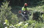 Endesa inverteix 1,6 milions en el Pla d'estiu de neteja i protecció de boscos a l'Alt Penedès i el Garraf