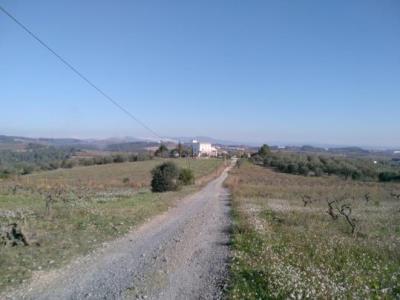 Espai on s'ubicarà l'Agroparc, amb el fons de la Masia de Can Mata d'Abellò. Bosc Verd