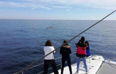 Albiren els primers exemplars de balena de la temporada a la costa del Garraf. EDMAKTUB