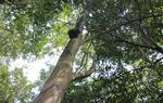 El Laboratori de Bioacústica de Vilanova capta les primeres imatges i sons des de l'Amazones