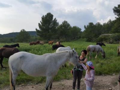 Els cavalls de la Fundació Miranda deixen el Parc del Garraf, camí del pla de l'Orri . Diputació de Barcelona