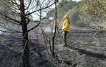 Les ADF del Penedès i Garraf endarrereixen l'inici de la campanya forestal fins al juliol