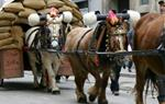 Tres Tombs . Eix