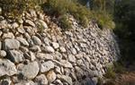 Camí de Santa Susanna entre Olivella i Avinyonet.