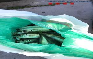 Denunciats quatre homes per vendre i comprar més de 50 quilos de peix al port de Vilanova fora de la llotja