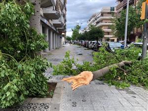 Destrosses a Vilanova per la tempesta que ha escombrat la comarca aquesta nit. Arbres caiguts, despreniments i inundacions