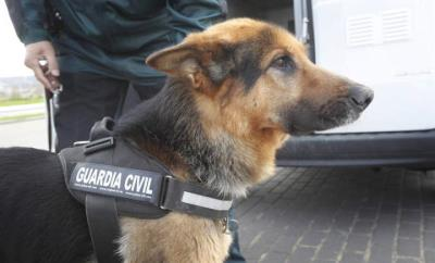 Imatge d'arxiu de la unitat canina de la Guàrdia Civil. Guàrdia Civil