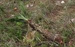 L'APMA denuncia a la Fiscalia de Medi Ambient la gestió forestal del Mas de l'Artís
