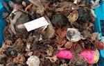 Les escombraries poden arribar a ser el 38% de la captura pesquera a Vilanova i la Geltrú. CSIC