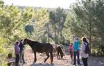 45 cavalls s'incorporen al projecte de regeneració de pastures al Parc del Garraf