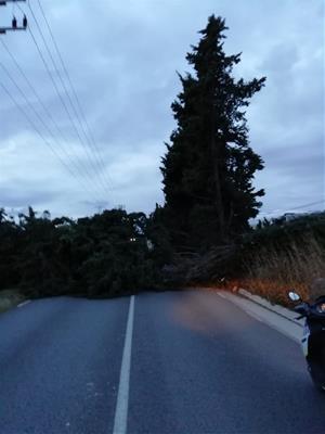 A Vilanova i la Geltrú, ha caigut un arbre de grans dimensions a la carretera BV-2115 a causa del vent