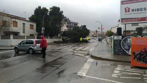 Arbres caiguts pel temporal a Sant Pere de Ribes