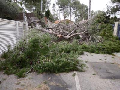 Efectes del temporal de vent i pluja a Olivella. Ajuntament d'Olivella