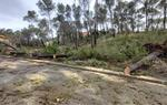 L'Ajuntament d'Olivella invertirà de forma urgent 176.000 euros per restablir la normalitat després del temporal