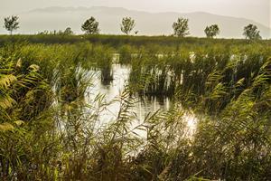 L'estreta relació entre la biodiversitat i el cicle integral de l'aigua