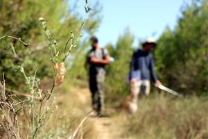 Estudien com es regeneren els boscos afectats per incendis a partir de les poblacions de cigales