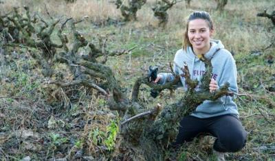 La vinya és el conreu amb més hectàrees dedicades a agricultura ecològica. BCN Smart Rural
