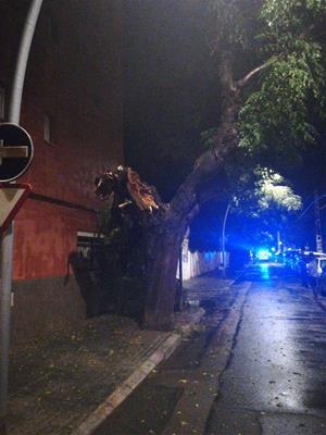 L'aiguat d'aquesta nit causa la caiguda d'arbres i branques a la via pública