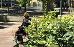 Naturalitzar les ciutats aporta qualitat de vida