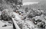 Paisatge plens de neu a La Llacuna
