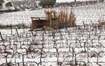 Paisatge plens de neu a Subirats