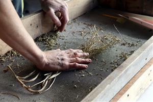 Un projecte innovador de l'Anoia posa al mercat llavors per cultivar a casa plantes silvestres comestibles